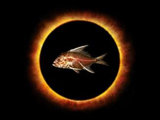 Fishheads_Eclipse-Logo