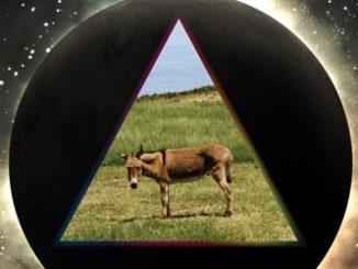 Gov't Mule Dark Side Of The Mule CD Cover